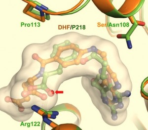Malarial Dihydrofolate Reductase as Drug Target - Proteopedia, life in 3D