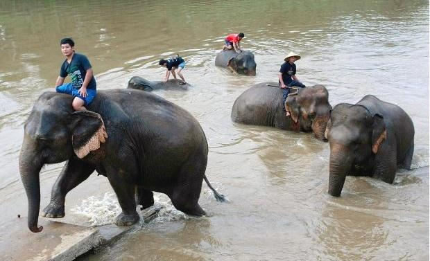 Ms. Rojana was going to pick up a swim ring, one of the elephants panicked and kicked her in the thigh