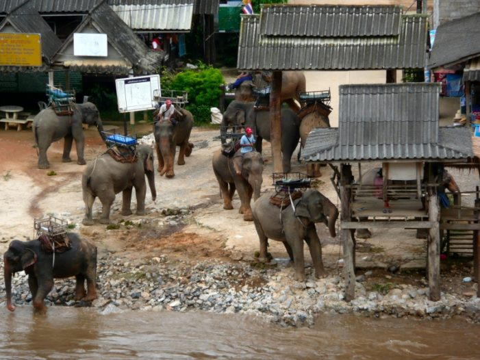 Chiang Rai Province Still Bustling with Tourists