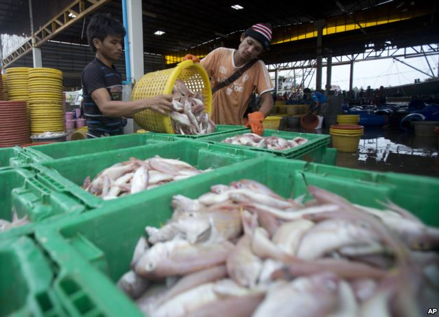 Migrant workers separate freshly caught fish by size at a fish market in Samut Sakhon Province, west of Bangkok,