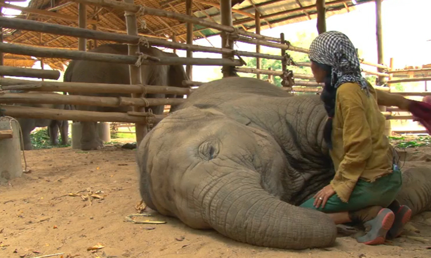 Woman Sings a Beautiful Lullaby to This Elephant, I'm Sure You've Never Seen What Happens Next