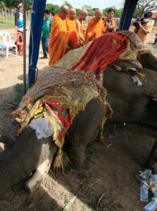 Monks chant rites for Phlai Khlao before the murdered, pillaged elephant  is buried