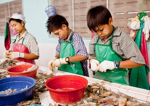Burmese children work in a Thai owned shrimp processing plant sorting and grading shrimp in Samut Sakhon, Thailand