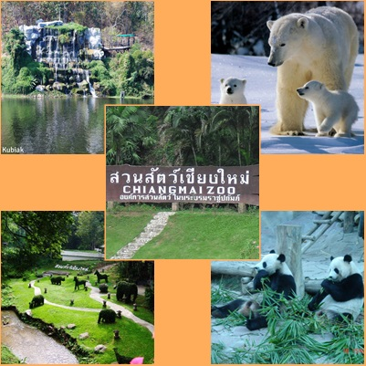 Junta Offers Free Admission to Chiang Mai Zoo's on 11 July