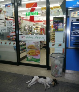 Stray dogs head to convenience stores in Thailand, receive free rabies shots and flea care