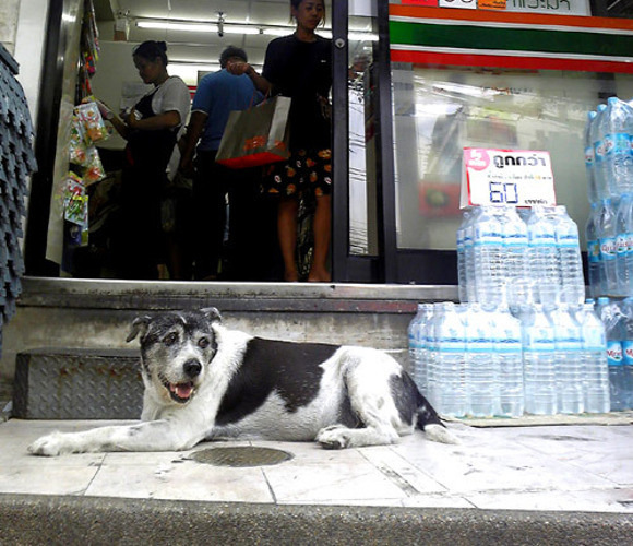 Stray Pooch lounging outside a 7-11 Store