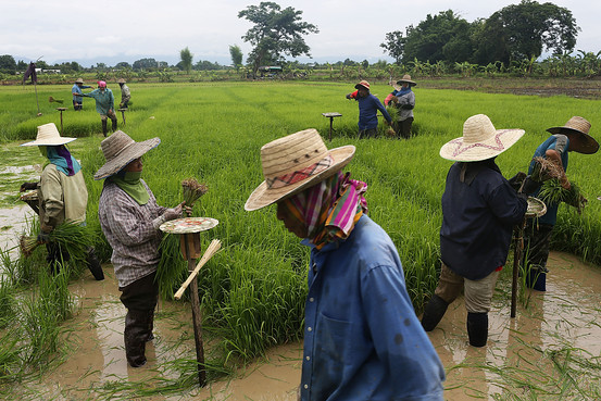 Those who pledge to store their rice for several months will get paid in interest-free loans while they wait to sell their stock at a better market rate.