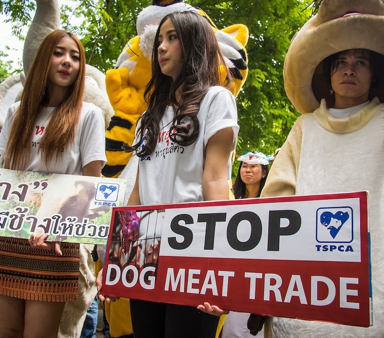 Members of the SPCAT picketed the Thai parliament