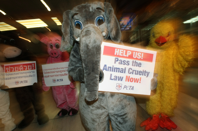 Animal Protection Bill Becomes Law in Thailand