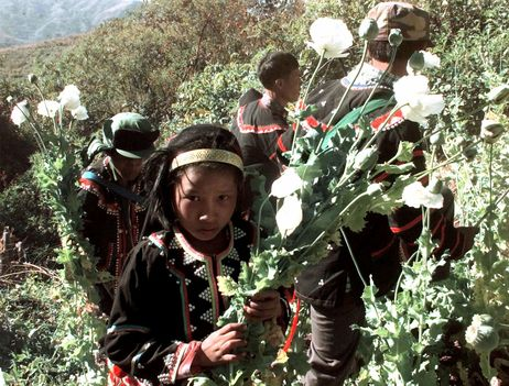 Lahu hill-tribe girl holds a bunch of opium poppies as she joined her tribe in eradicating of illegal opium poppy at Lwe San Sone in Myanmar's Shan State