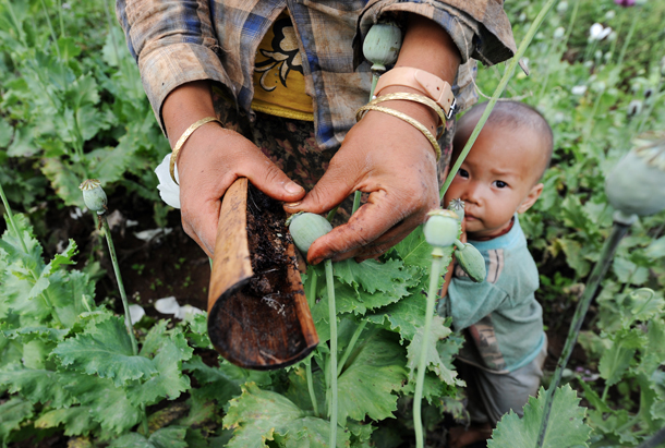 A young child stays close to his mother as she gathers opium resin from one of the many poppy fields in Phekon Township, southern Shan State