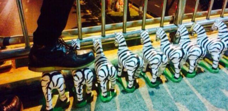 man's foot standing on a row of zebra figurines