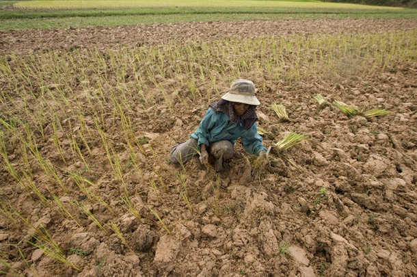 Officals Report Thailand's Crops to Suffer Worst Drought in 15 Years