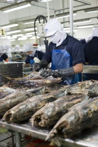 Worker process skipjack tuna at a Thai Union Frozen Products