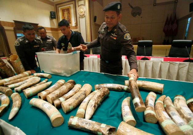 Thai Authorities Seize 135 Kilograms of Ivory in Surin Province