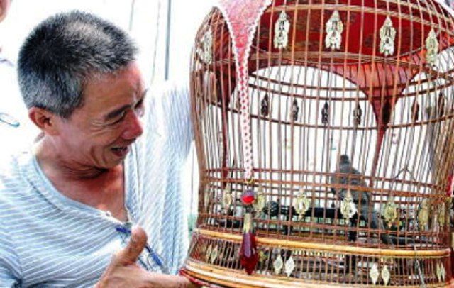 Thailand's Singing Zebra Doves, Big Business in Southern Thailand