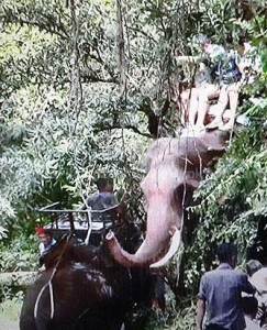 Three members of a Chinese family rescued and safe after a male elephant ran amok Photo by Cheewin Sattha Please credit and share this article with others using this link:http://www.bangkokpost.com/news/general/669584/terrified-tourists-rescued-from-killer-jumbo. View our policies at http://goo.gl/9HgTd and http://goo.gl/ou6Ip. © Post Publishing PCL. All rights reserved.