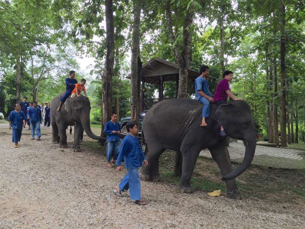 Other Autistic children riding elephants in Lampang