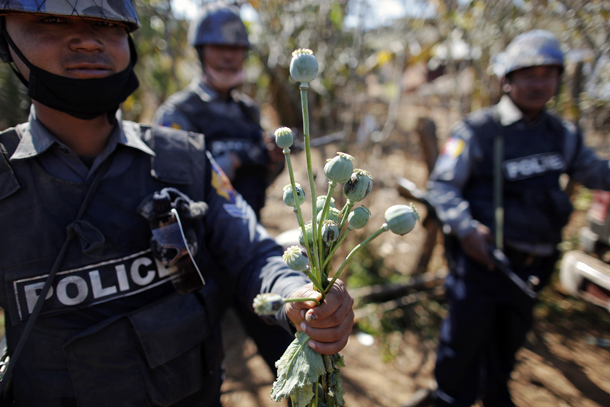 ATTENTION EDITORS THIS IS 7 OF 35 PICTURES FROM MYANMAR'S OPIUM WAR BY REUTERS PHOTOGRAPHER DAMIR SAGOLJ  A policeman holds poppy plants after a field was destroyed above the village of Tar-Pu, in the mountains of Shan State January 27, 2012. Myanmar has dramatically escalated its poppy eradication efforts since September 2011, threatening the livelihoods of impoverished farmers who depend upon opium as a cash crop to buy food. With new ceasefires ending years of conflict between the government and ethnic insurgents, Myanmar police and United Nations officials are travelling through opium-rich Shan State to ask farmers what assistance they need. Picture taken January 27, 2012. REUTERS/Damir Sagolj (MYANMAR - Tags: DRUGS SOCIETY)