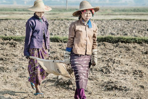 Migrant workers from Myanmar work in an agricultural field in Chiang Rai