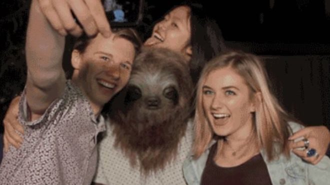 Australia's Marijuana Smoking 'Stoner Sloth' Gives Twitter the Giggles
