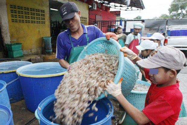 A Myanmar child labourer is shown at a seafood processing plant in Samut Sakhon