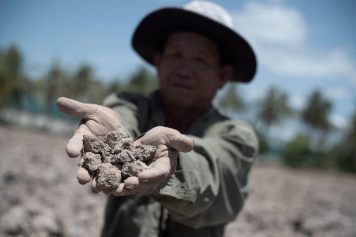 Thai Rice Farmers Struggling with Drought, Low Returns, and Rising Competition