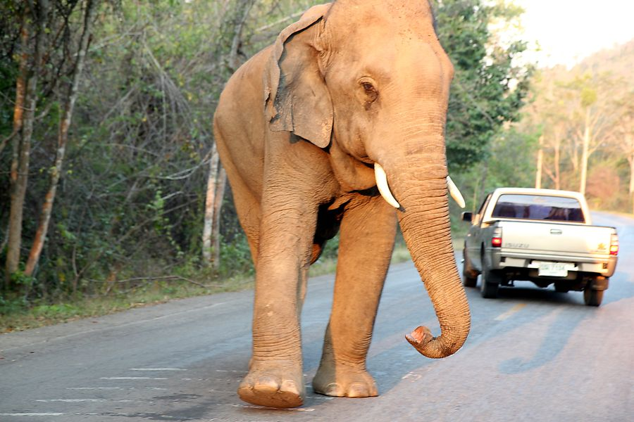 Khao Soi Dao National Park in Chanthaburi said the woman and her son were believed to have been attacked by a 10-year-old male elephant