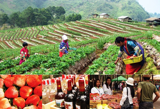 Samoeng district is known as a one of Thailand's top strawberry producers