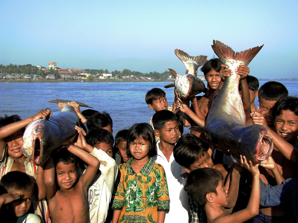 Crowd of children with Pra or River catfish (Pangasianodon hypophthalmus). River catfish are closely related to the Mekong giant catfish, Pangasiandon gigas, a critically endangered Mekong endemic. Fishers harvest both the river catfish and the Mekong giant catfish as they migrate from the Tonle Sap Lake to the Mekong River at the end of the rainy season.Tonle Sap River, Cambodia