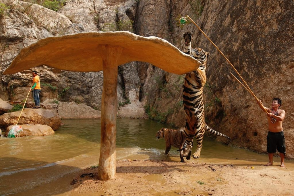 One visitor to the temple said the tigers should be left there, rather than being confiscated.