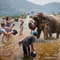 Don't Ride Elephants, Wash Them, tourists to interact with and learn about elephants in a responsible way.
