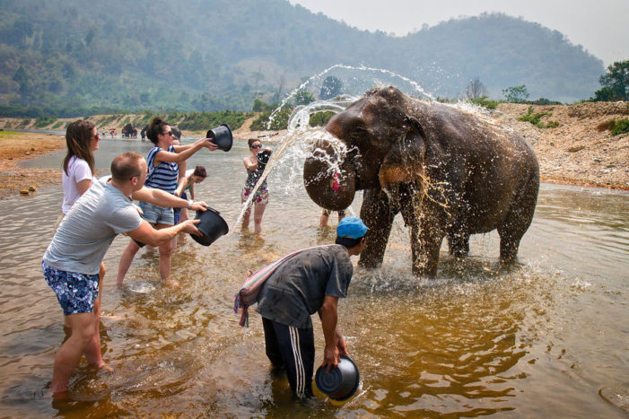 Chiang Rai Tourism told Elephant Shows and Treks are No-Go Zone for European Tourists