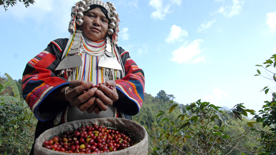 The project supports 12,000 hill tribes families who live in in Doi Chaang.