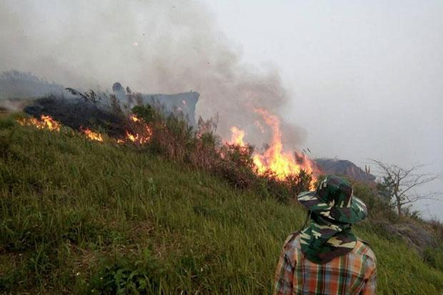 Wildfire Stopped from Spreading into  Phu Chi Fa National Park