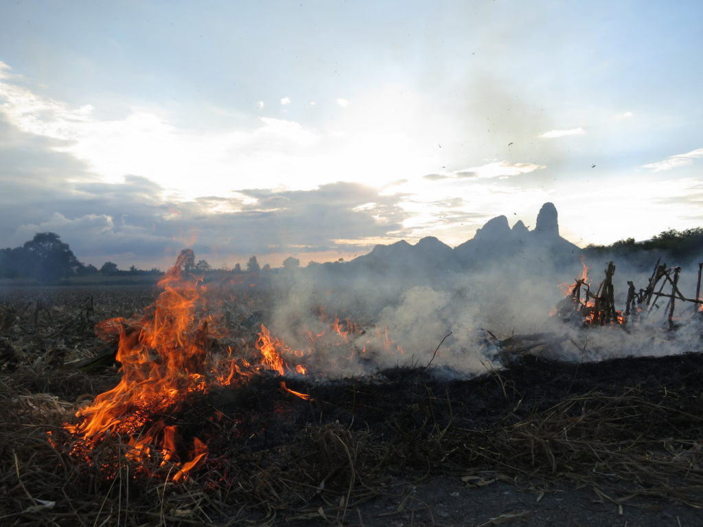 Farmers practice slash and burn agriculture in the belief that ashes will replenish the soil