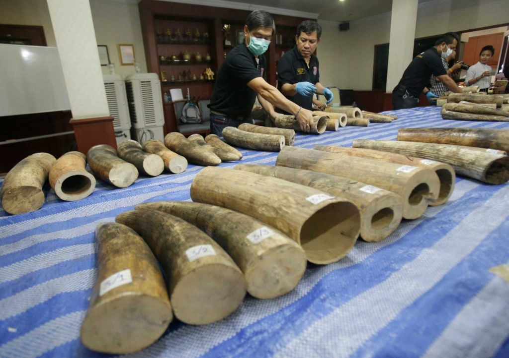 87 ivory tusks was found March 27 in a dozen barrels sent from Mozambique
