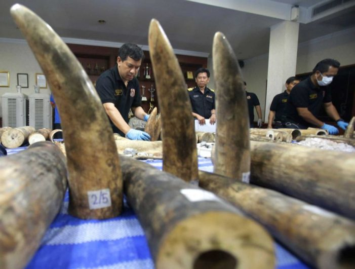 Thai Customs Seize $800,000 Worth of Ivory from Africa