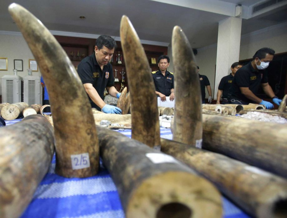 Thai customs officials display seized ivory during a press conference in Bangkok, Thailand, Tuesday, April 5, 2016