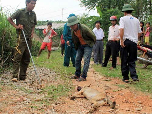 Health Officials Concerned about Rise in Rabies Cases in Thailand