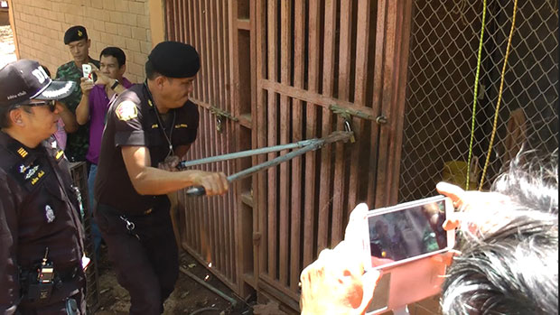 Thai Wildlife Authorities Raid Tiger Temple and Remove Tigers