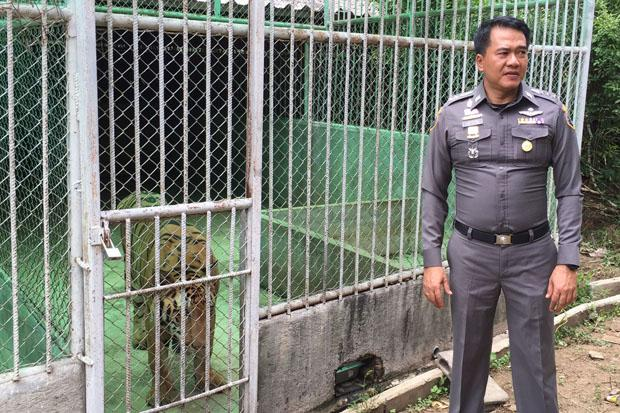 Pol Col Montree Paencharoen, deputy commander of the Natural Resources and Environmental Crime Division, shows one of the tiger cages during the raid in Kanchanaburi province on Tuesday. (Photo by Piyarach Chongcharoen)