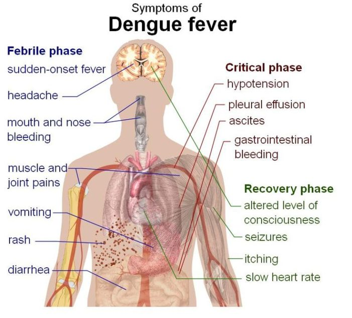 Chiang Rai Health Authority Warns of Dengue Outbreak