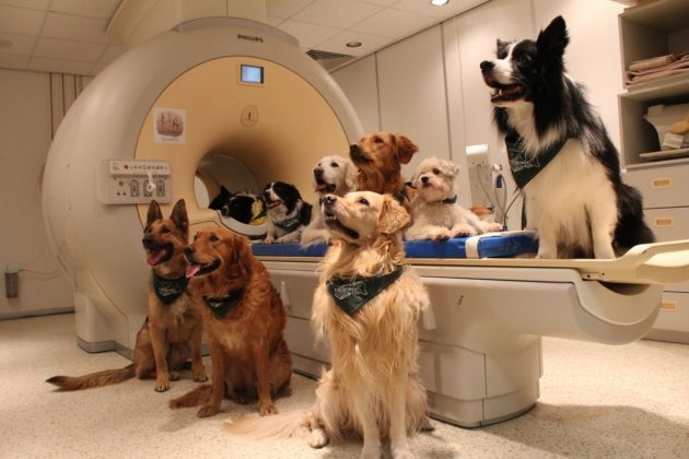 Trained dogs gather around the fMRI scanner in Budapest. The researchers said the dogs seemed to enjoy lying in the scanner during the experiment.