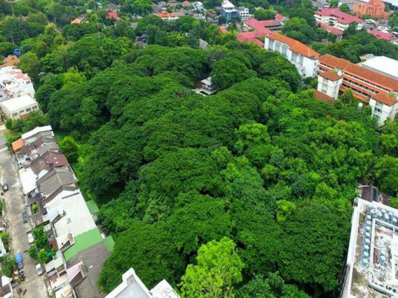 The public green space is located in the historic district of Chang Klan, in the heart of Chiang Mai city, and is Treasury-owned land.