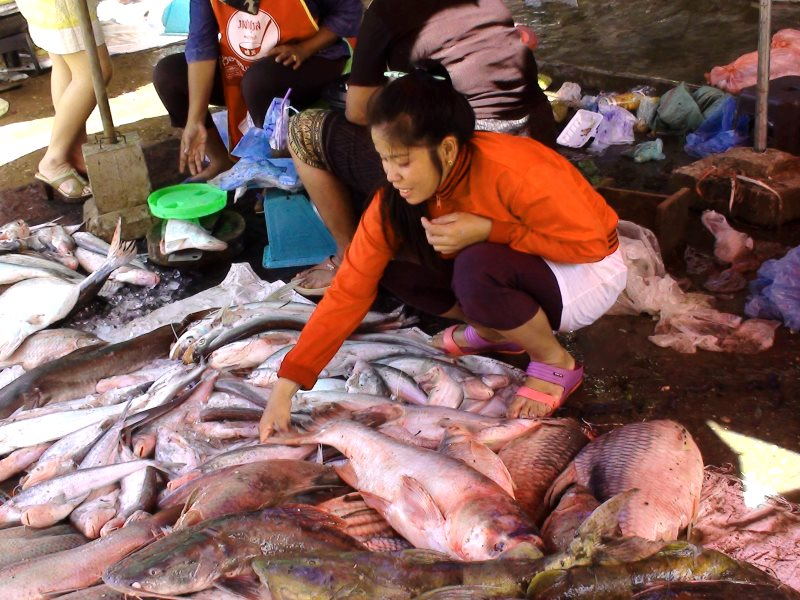 Some species of fish have gone altogether. Fishing as a main livelihood has almost disappeared.