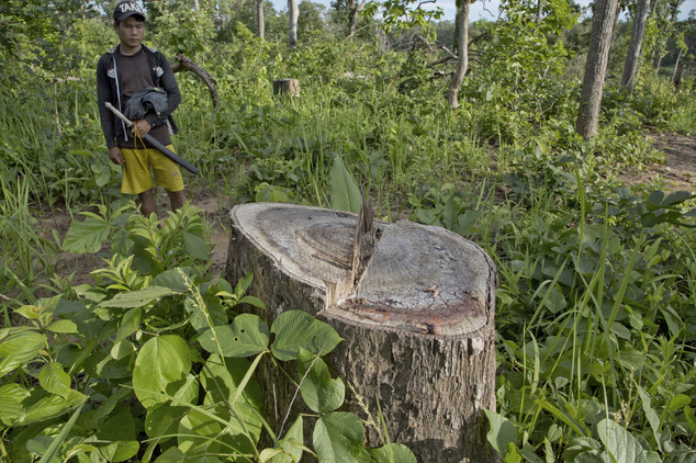 In this June 25, 2016 photo, an environmental activist who aims to combat illegal logging, stands next to a tree stump at a recently raided illegal logging site in what use to be a forest in Chaung Gwet, in northern Sagaing division, Myanmar. Myanmar is struggling to stop illegal logging that has erased one-quarter of the country's valuable forests in a generation. Teak, rosewood and other rare hardwoods continue to be cut down, despite a government ban, the Associated Press found on a recent trip to the country's north. China and India are the biggest markets for the timber by far. (AP Photo/Gemunu Amarasinghe)