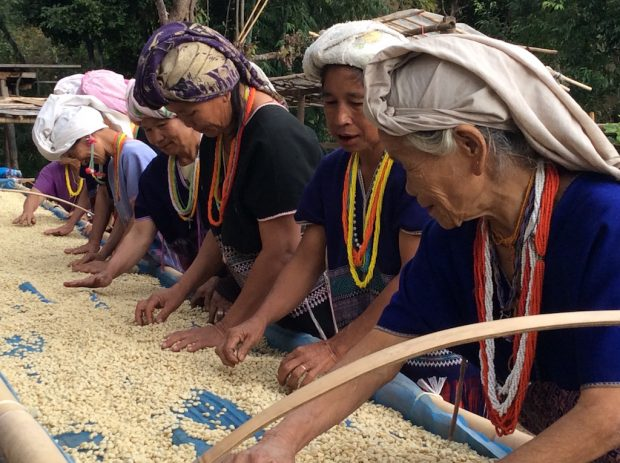 Connecting Elephants, Reforestation and Tribal Coffee of Northern Thailand