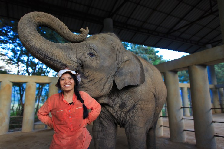 Lek Chailert has been rescuing and caring for ailing animals since childhood.