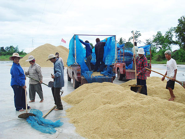 Thai Prime Minister Tells Farmers Government Trying to Solve Problem of Dropping Rice Prices